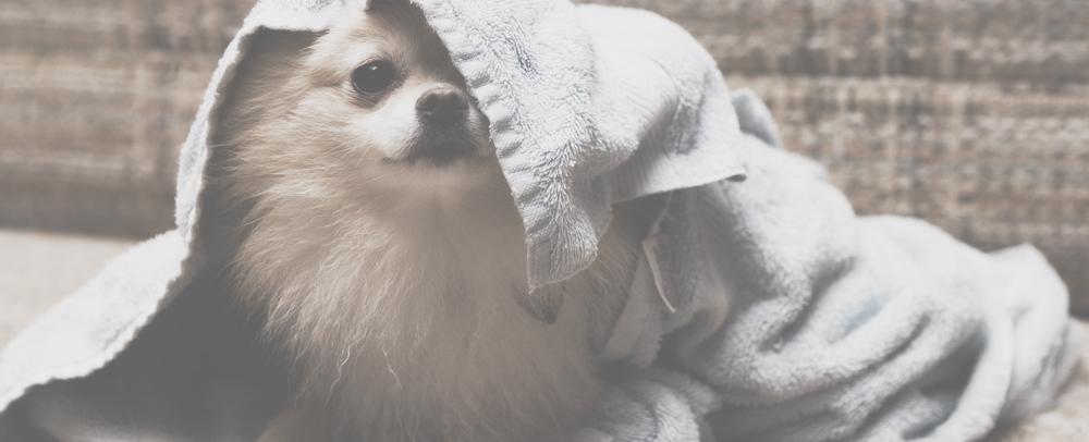 Elite Pets Dog Grooming
